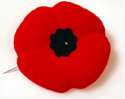 Canadian poppy pin